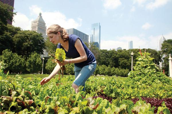girl picking greens with Chicago skyline in background